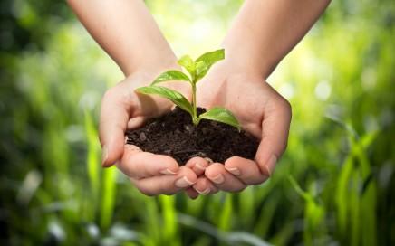 Vitalstoffe - Schätze der Natur