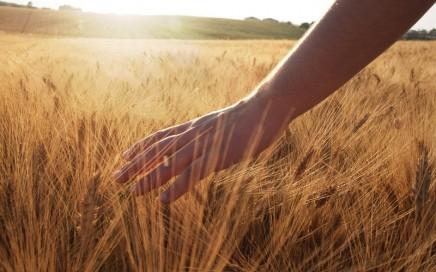 Enzyme – der Schlüssel für eine gute Verdauung
